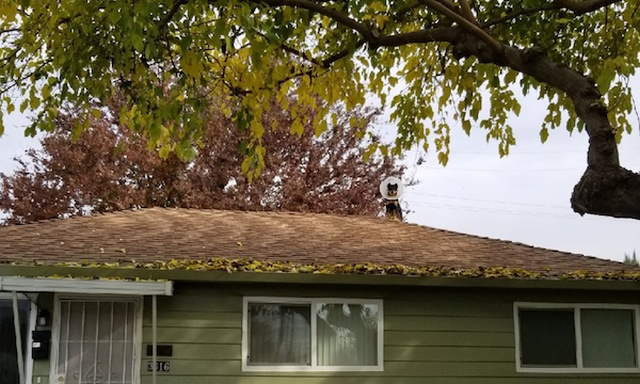 Dogs On The Roofs (24 pics)