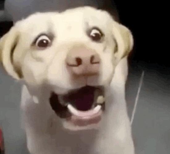 Dogs GIFs (12 gifs)