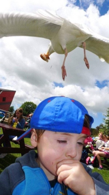 Great Timing Photos (65 pics)