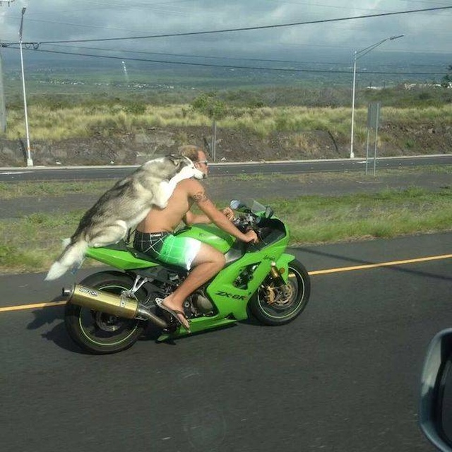 You Don't See This Everyday (38 pics)