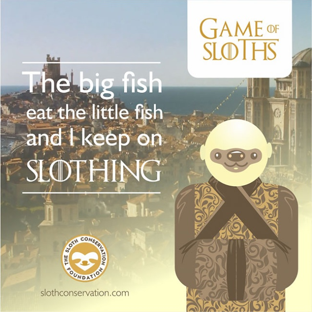 Game Of Sloths (11 pics)