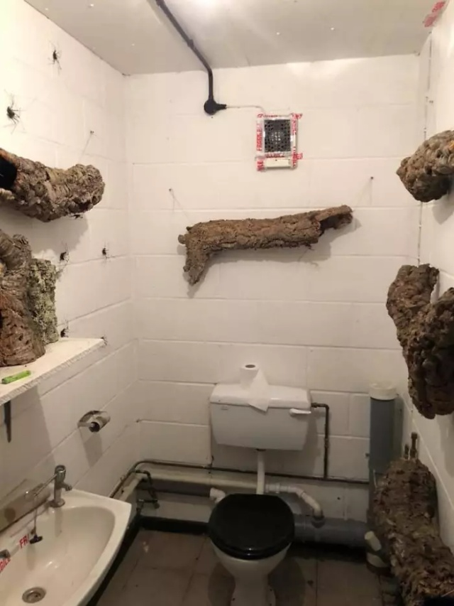 Someone Designed A Bathroom To House Giant Spiders And Its An Arachnophobia Nightmare (5 pics)