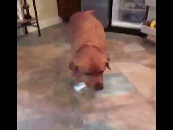 Dog, Make Yourself Useful