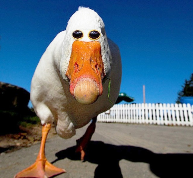 If Animals Had Eyes At The Front (20 pics)