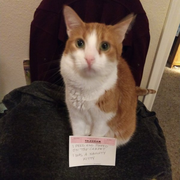 Pet Shaming (27 pics)
