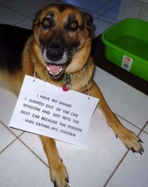 Pet Shaming (27 pics)