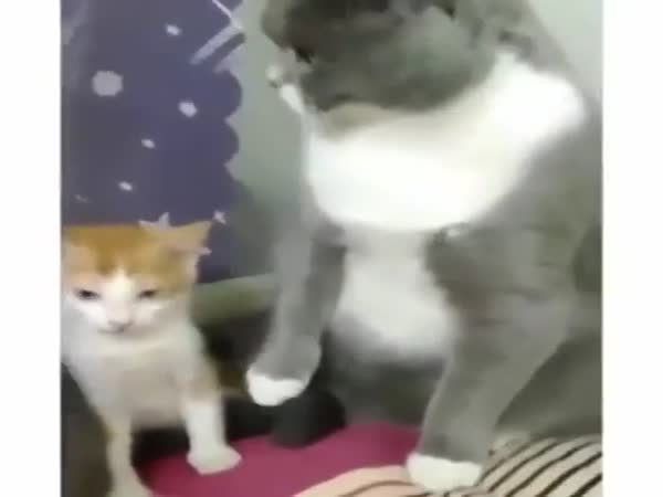 These Cats