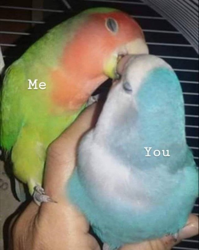 Flirt Memes (31 pics)