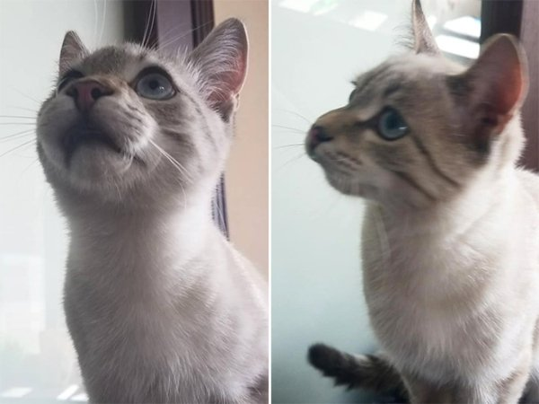 Cats vs Bees (25 pics)