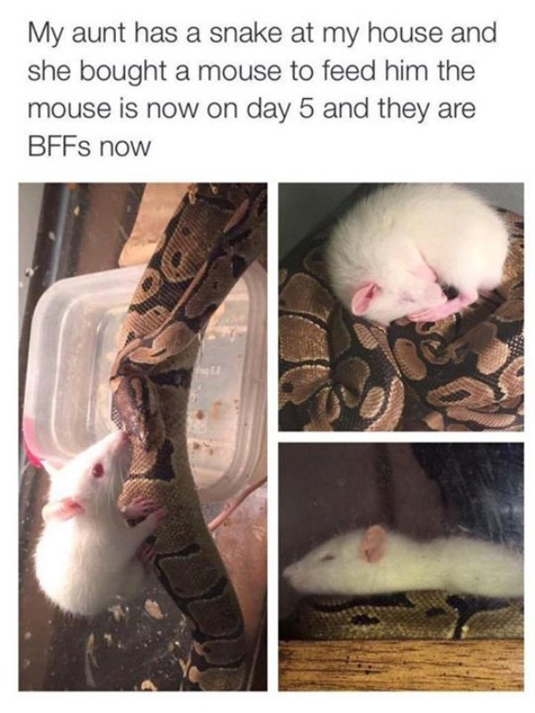 Snakes Can Be Friends (43 pics)