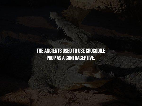 Crazy Facts (15 pics)
