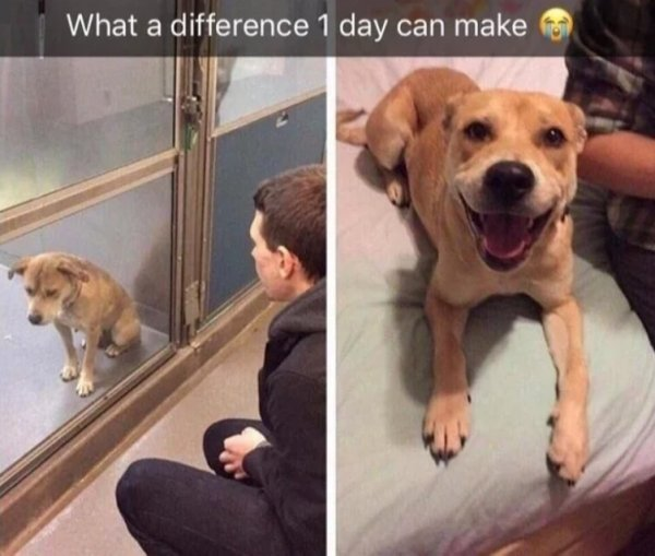 Pets Before And After Adoption (32 pics)
