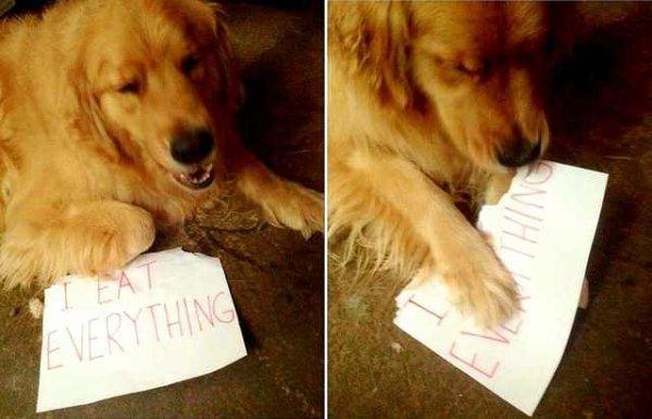 Dog Memes (27 pics)