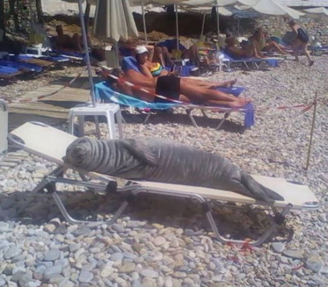 Funny Beach Photos (34 pics)