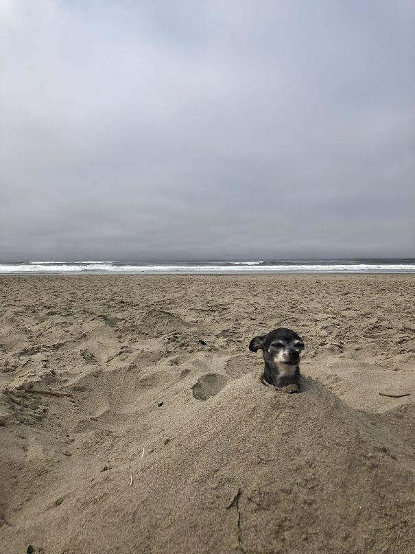Funny Beach Photos (34 pics)