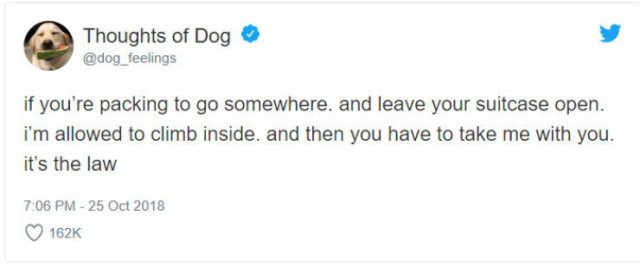 What If We Could Read What Dogs Think (30 pics)