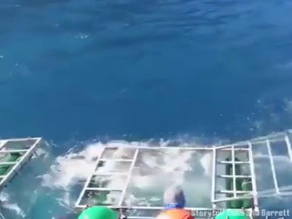 Every Divers Worst Nightmare
