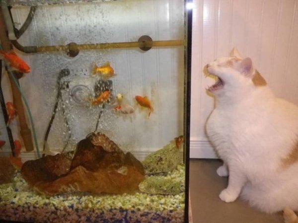 Funny Animals (50 pics)
