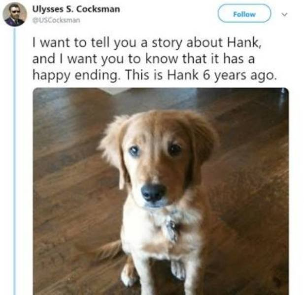 Hank Is A Hero (11 pics)