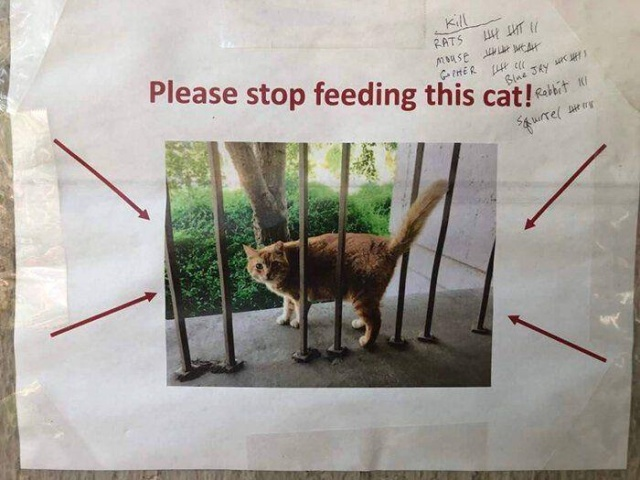 In California, Physics Students Using Graphs Asked Not To Overfeed A Cat (4 pics)