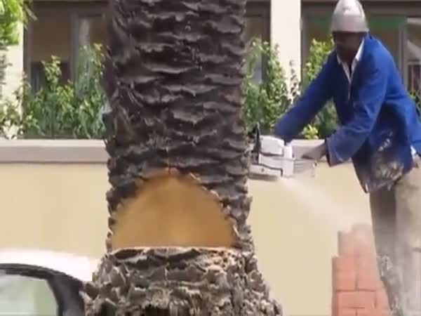 Capetown Tree Cutting Techniques