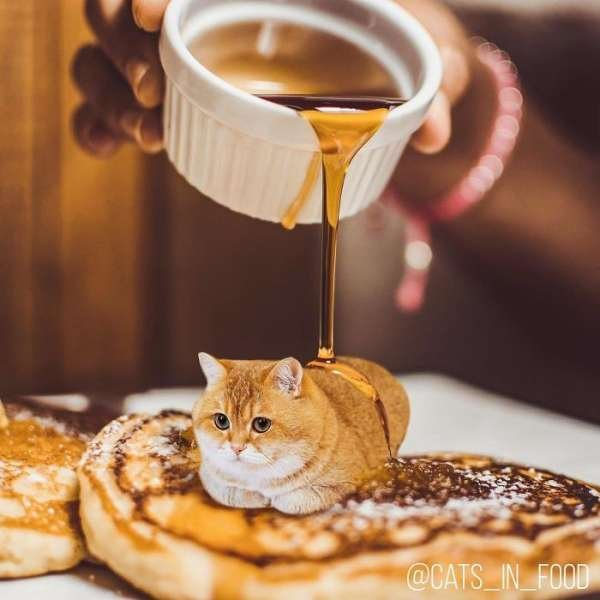 Cats In Food (30 pics)