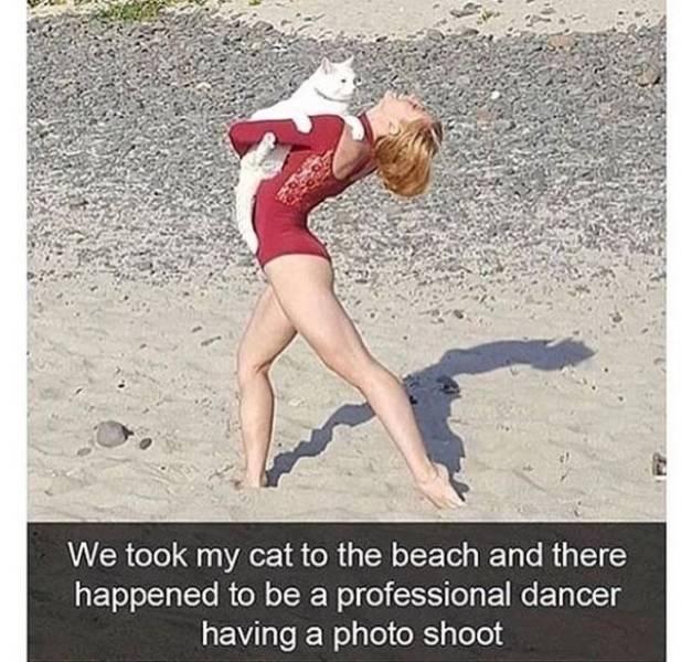 Animal Memes (27 pics)