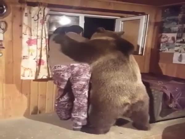 Bear's Sympathy
