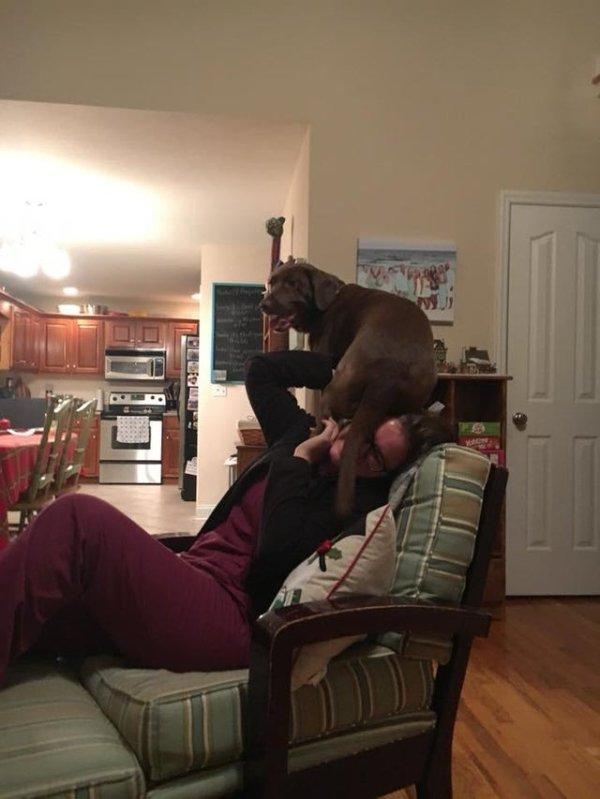 Animals' Bad Behavior (27 pics)