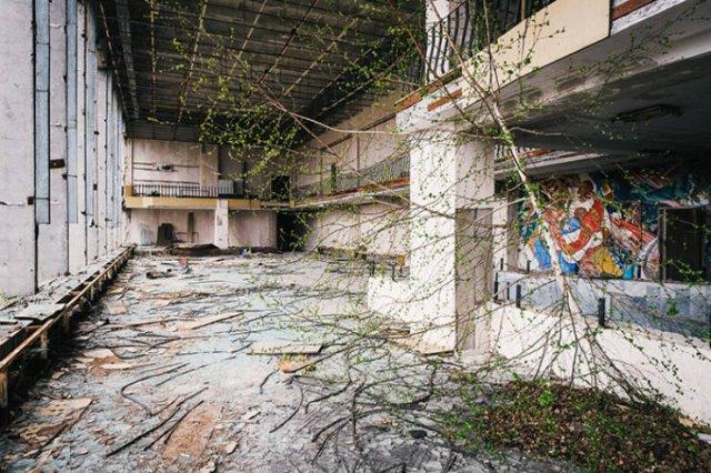 Nature Takes Chernobyl Back (65 pics)