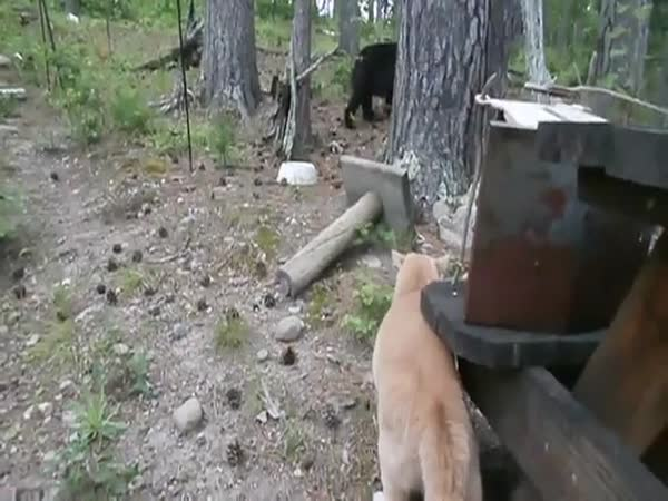 Get Over Here, You Overgrown Hamster