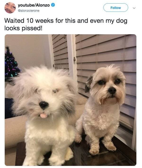 These Dogs Are Not Very Happy (20 pics)