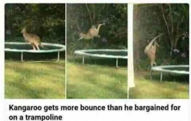 These Pictures Are VERY Funny (59 pics)
