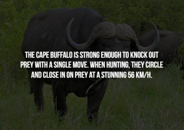 Scary Animal Facts (17 pics)