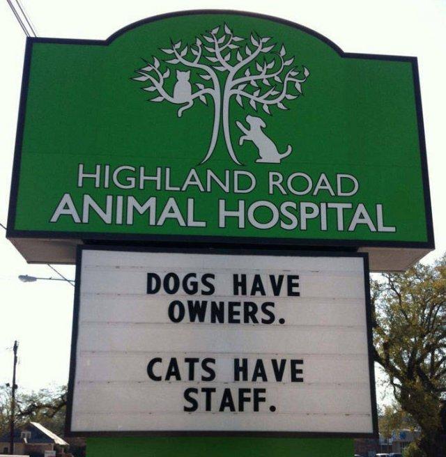 Cat Jokes By Vet Clinics (30 pics)