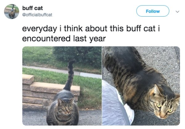 Funny Cats (32 pics)