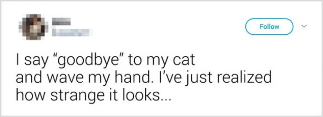 What People Tell Their Cats Before Leaving Home (22 pics)
