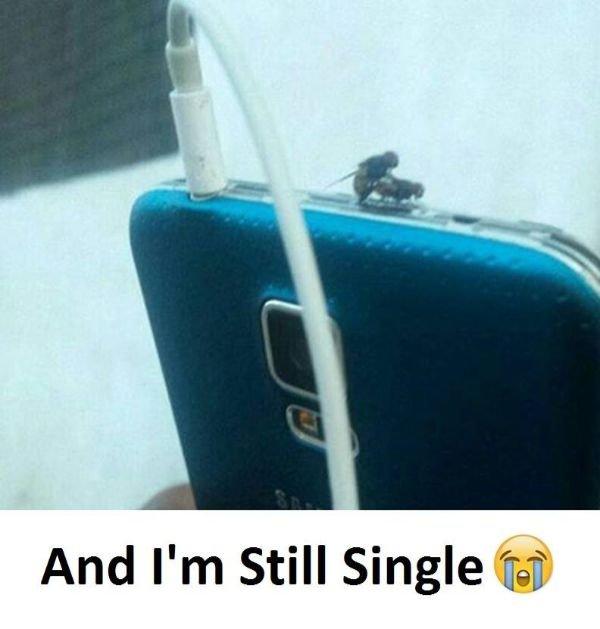 Single Memes (27 pics)
