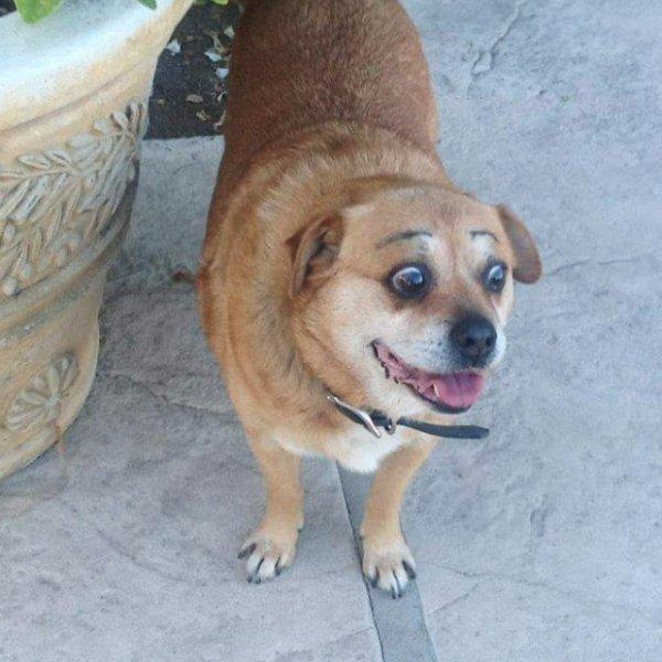 Funny Animals (56 pics)