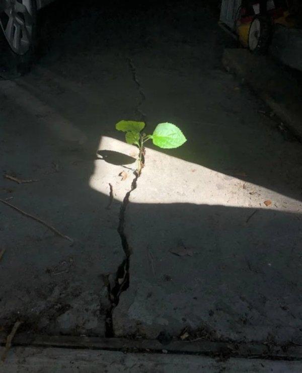 Plants Can Grow Anywhere (28 pics)