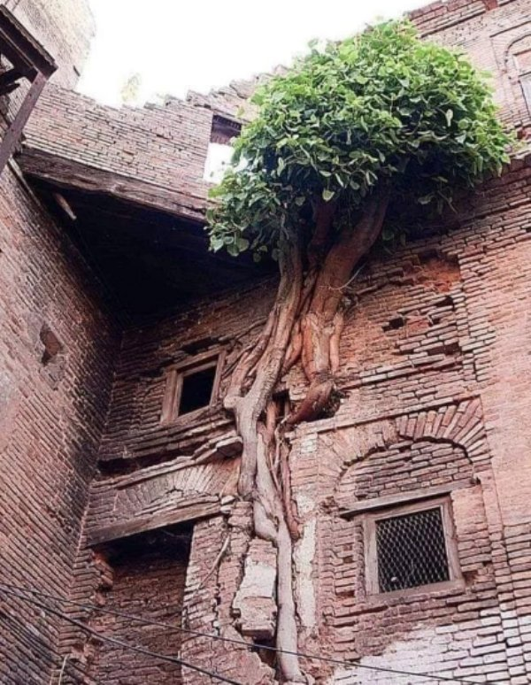 Plants Can Grow Anywhere (28 pics)