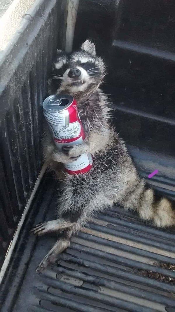 Alcohol Memes (25 pics)