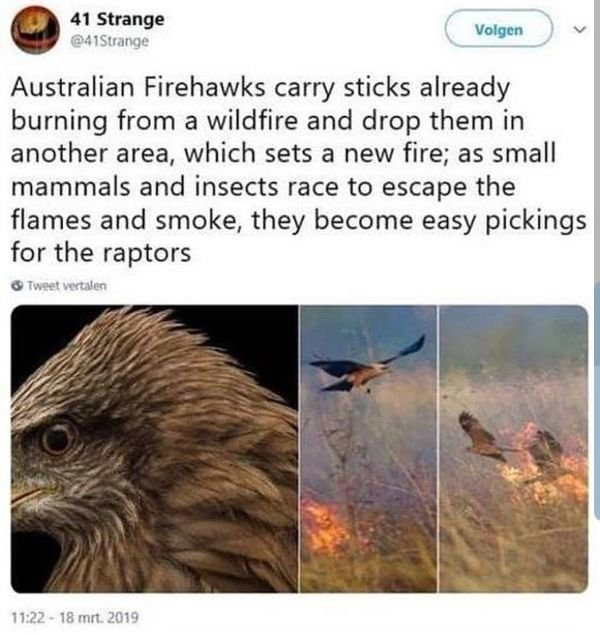 Australia Can Be Good And Bad At The Same Time (30 pics)