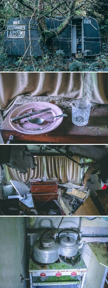 Discoveries In The Woods (33 pics)