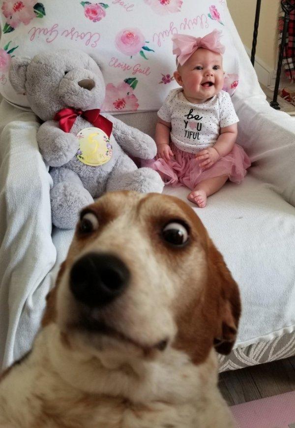 Funny Animals (65 pics)
