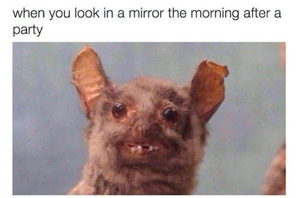 Drinking Memes (31 pics)