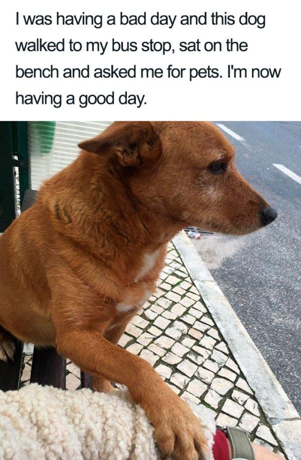 Dogs Are Amazing Creatures (36 pics)