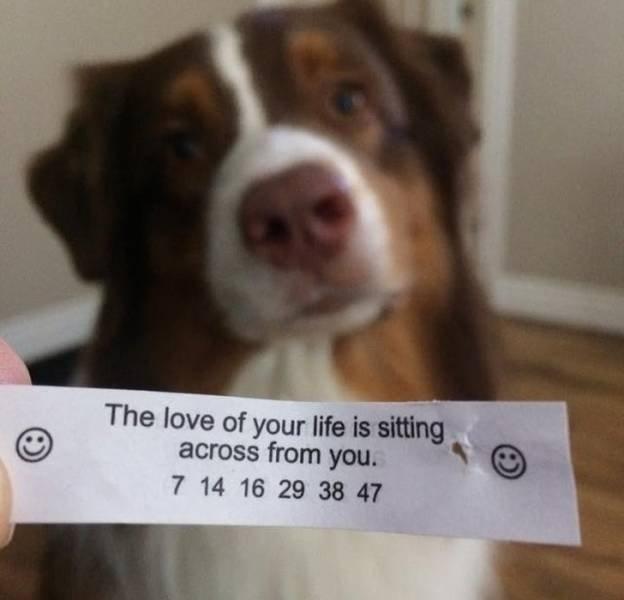 Everyone Needs A Pet (20 pics)