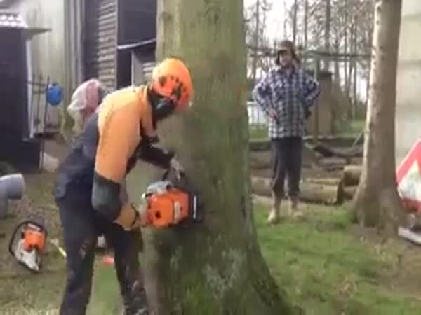 How To Cut A Big Tree