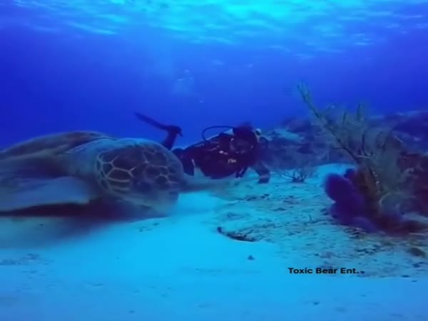 This May Be The Largest Turtle Ever Recorded On Camera
